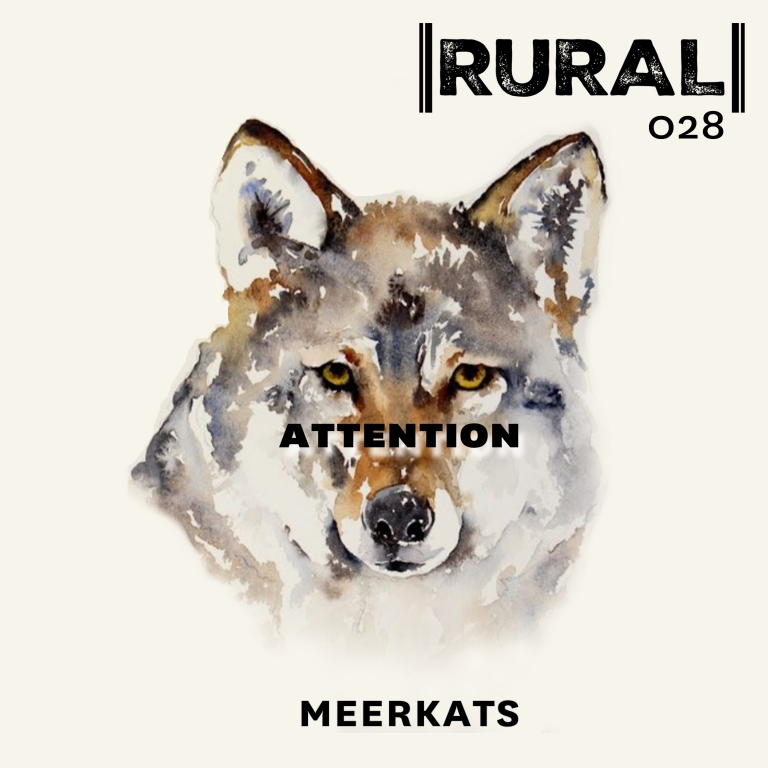 ATTENTION by MEERKATS